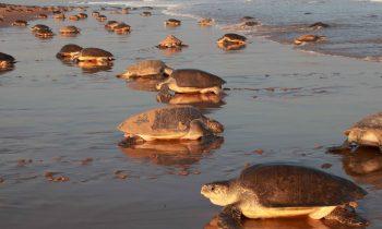 Загадочный исчезающий пляж Чандипур