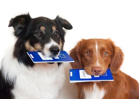 Необходимы документы на животное