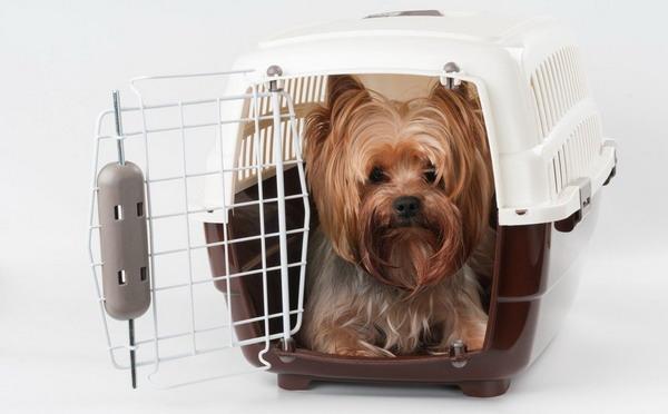 Правила перевозки животных на борту