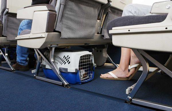 Переноска на борту размещается под креслом