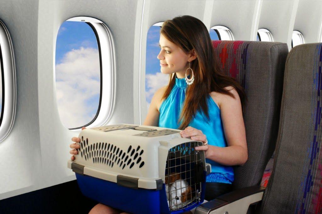 Перевоз собаки на борту