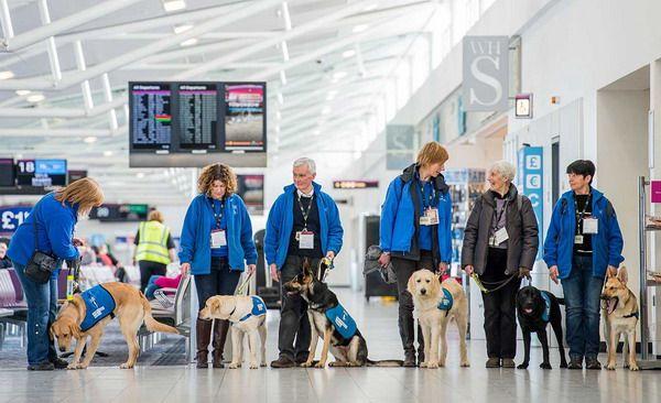 Собаки специального назначения летают в салоне