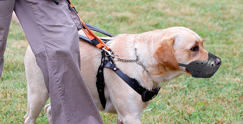 9 перевозка служебных собак