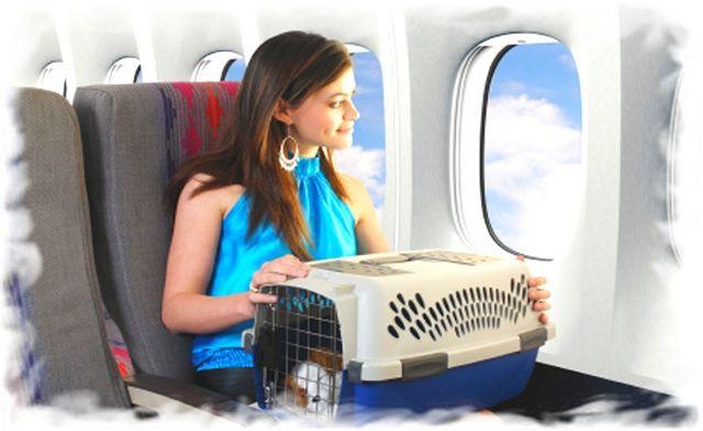 Провоз животных в самолете