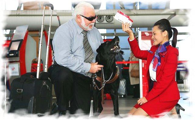 Собакам-поводырям можно лететь в салоне со своим хозяином